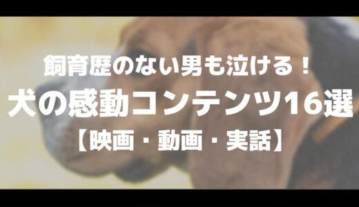 飼育歴のない男も泣ける!犬の感動コンテンツ16選【映画・動画・実話】